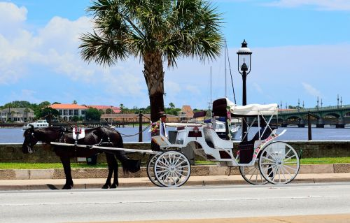 horse and carriage st augustine florida