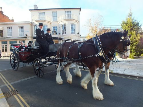 horse and carriage dray carriage