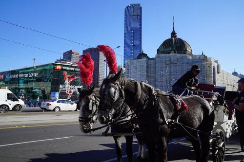 horse and carriage ride melbourne city fantasy ride
