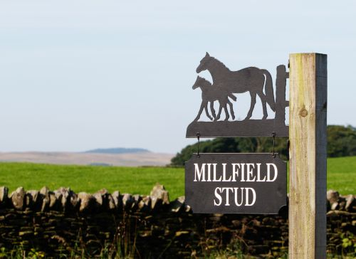 Horse And Foal Sign Lanscape