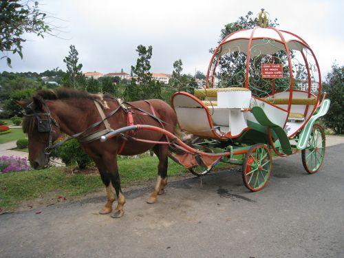 horse carriage horse wagon