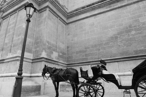 horse carriage carriage horses