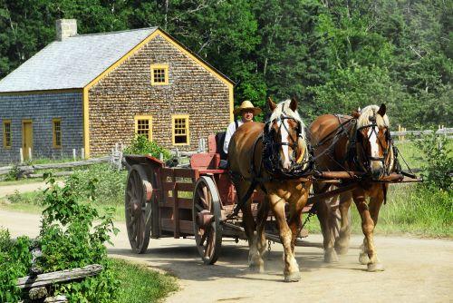 horse-drawn cart transportation