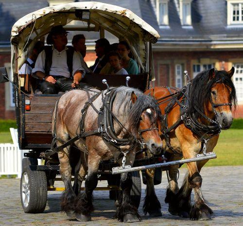 horse drawn carriage drag livestock