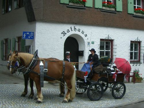 horse drawn carriage horse ross