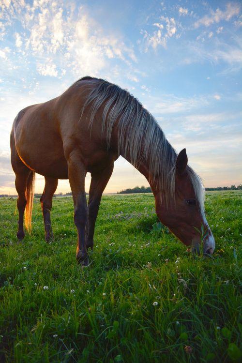 horse grazing horse pasture