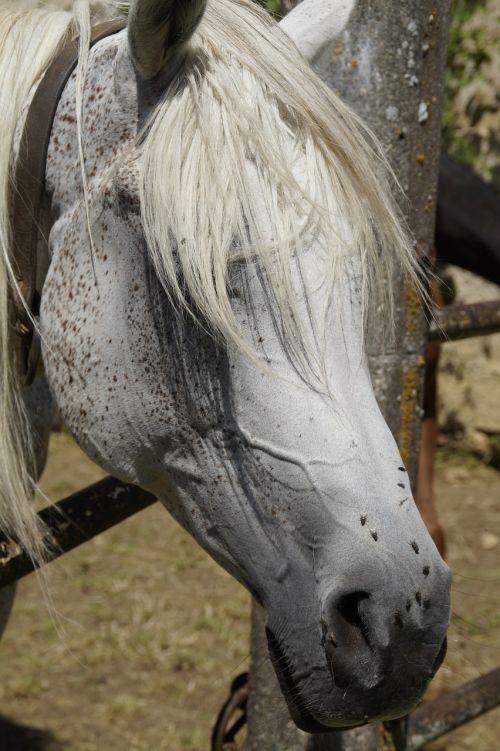horse head summer fly plage
