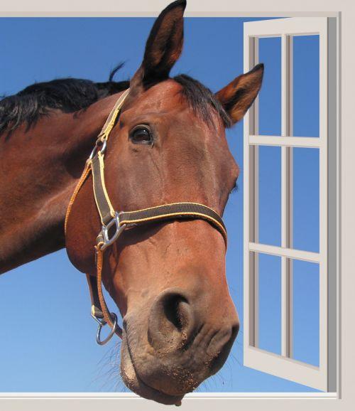 Horse Head Through Window