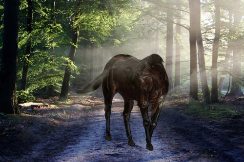 Horse In Misty Forest
