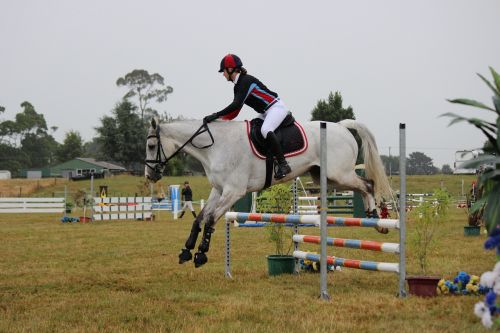 horse jumping,jump,horse,equestrian,rider,sport,competition,jumping,show,equine,riding,horseback,show jumping,ride