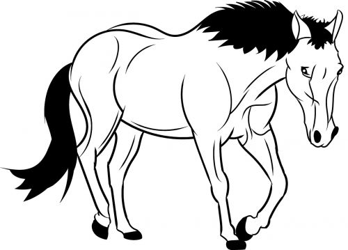 horse outline animal wild