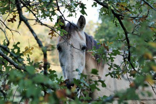 Horse Peeking Through The Trees