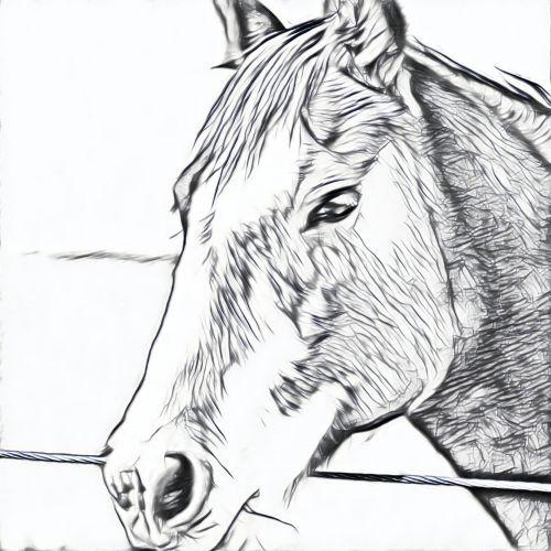 arklys, portretas, eskizas, galva, juoda, balta, gyvūnas, vidaus, naminis gyvūnėlis, piešimas, menas, arklio portretas