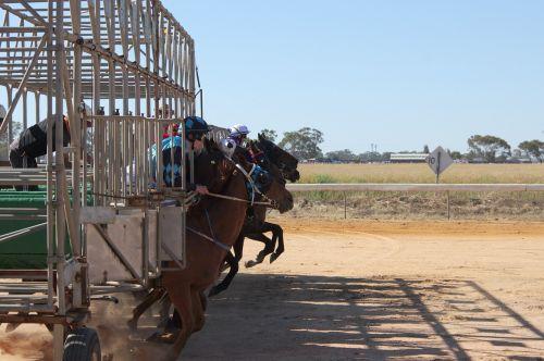 horse racing barrier jump