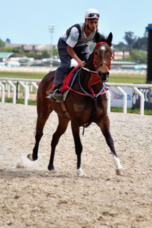 horse racing horses thoroughbreds