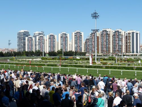 horse racing gallop sport