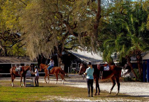horse riding horses equestrian