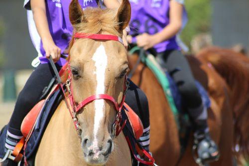 horse riding endurance pony