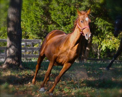 horse running animal spring