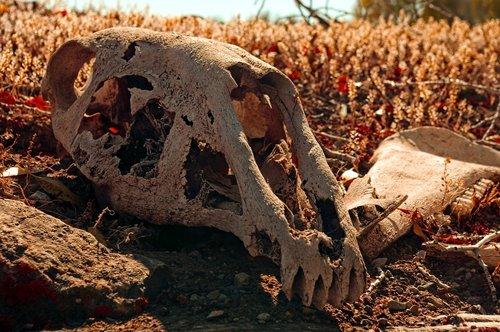 horse skull on sod roof  skull  bone