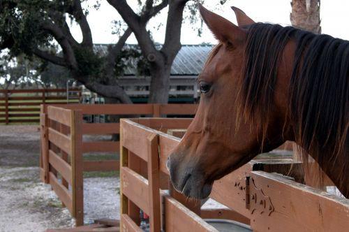 Horse Up Close