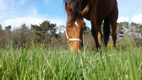 horse walker horse close