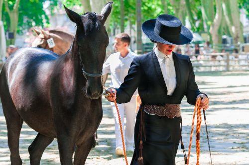 horseback riding horse competition
