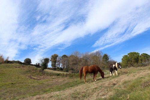 horses animals field
