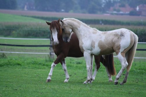 horses animals love