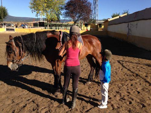 horses sierra animal