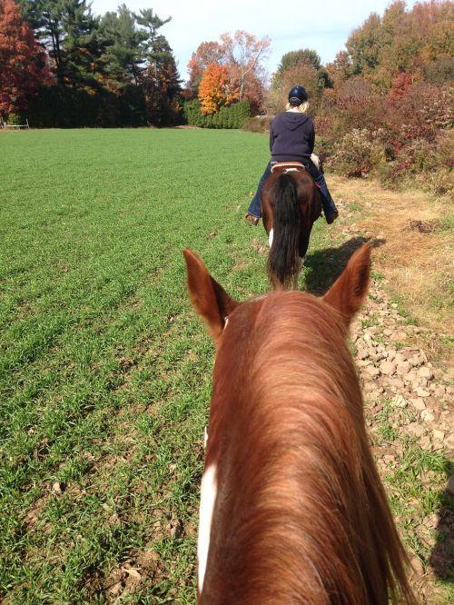 horses trail riding riding