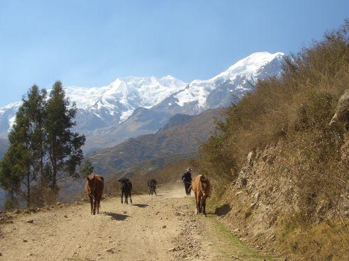 mountains road bolivia