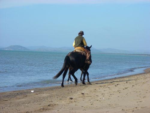 horses beach twilight