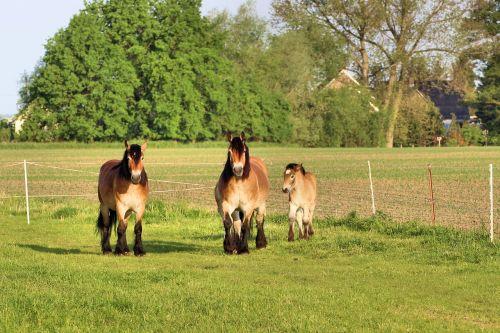 horses mares foal