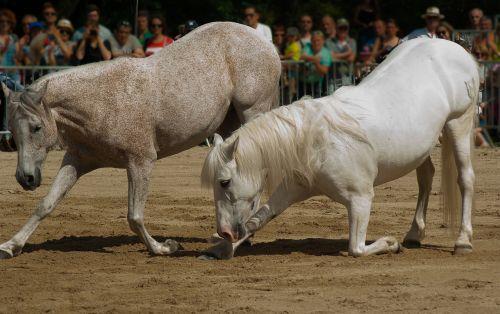 horses dressage horse show
