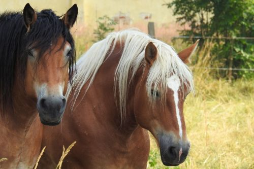 horses cold blooded animals mares