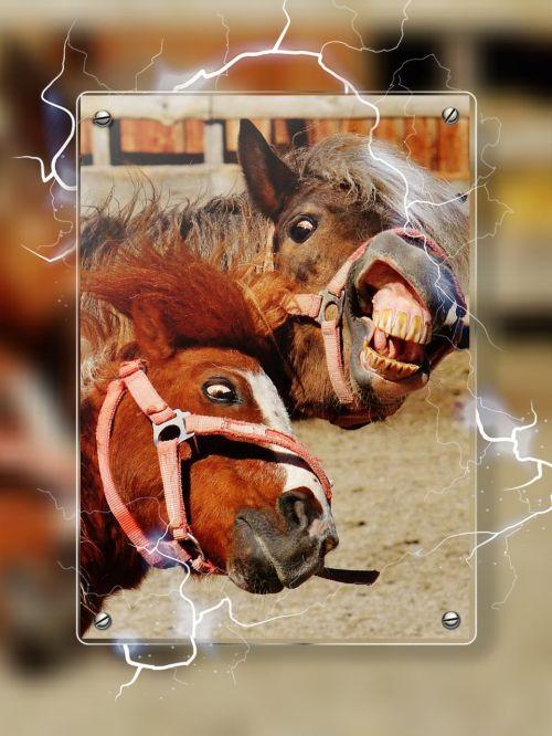 horses play crazy