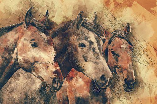 horses horse head animals