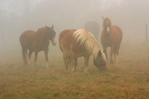 horses horse in mist fog