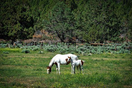 horses mother foal
