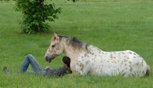 horses colts animals