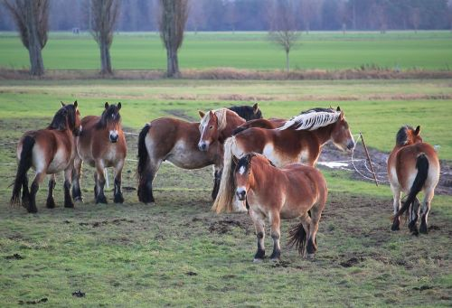 horses pasture cold blooded animals