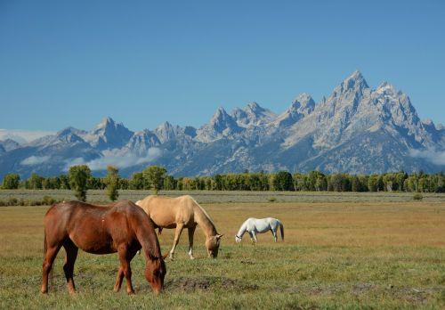horses mountains landscape