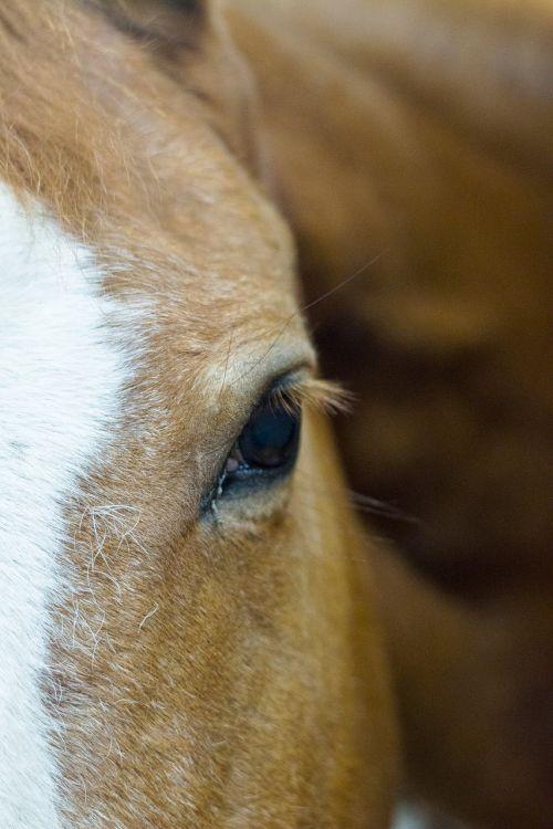 horses stables equestrian