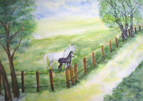 horses coupling pasture
