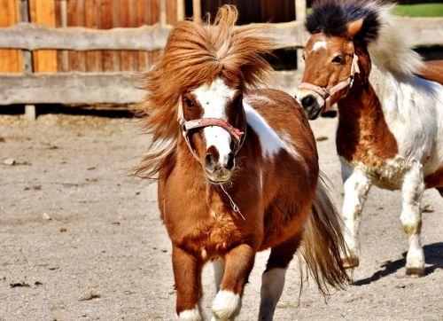 horses play funny