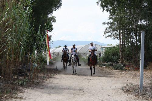 horses endurance race
