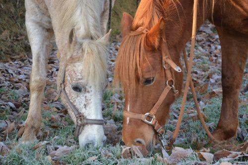 horses mares horse