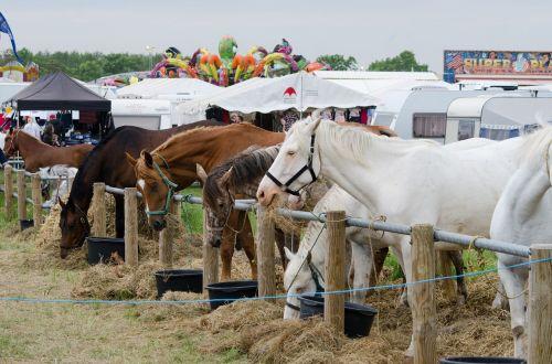 horses fair festival