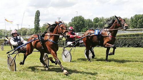 horses race trot
